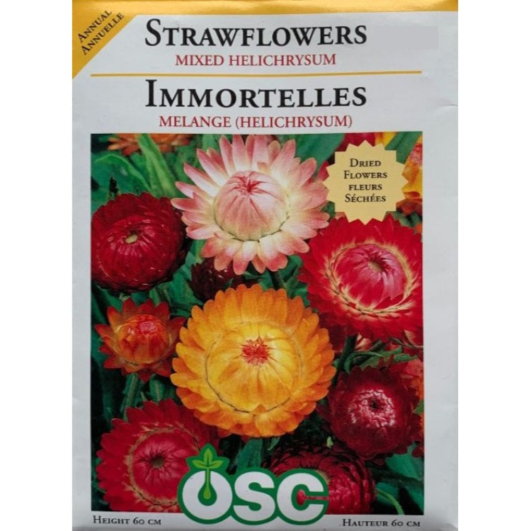Strawflowers Seeds- Mixed Helichrysum