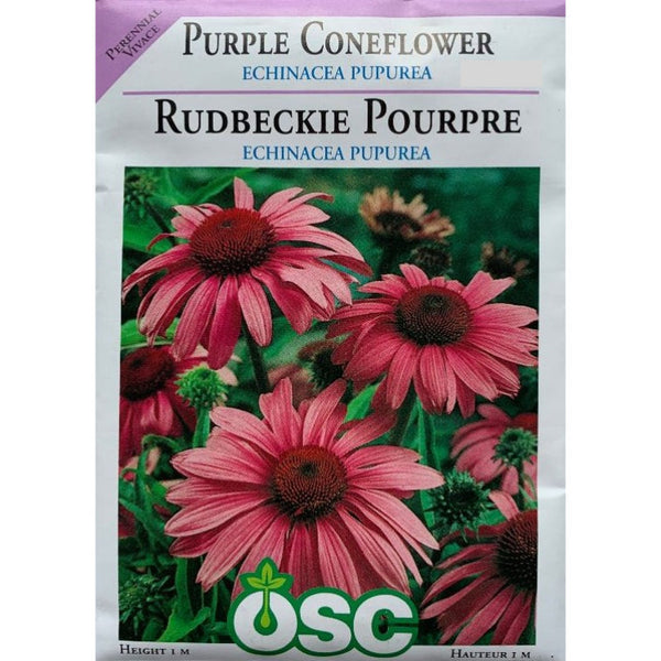 Purple Coneflower Seeds- Echinacea Pupurea