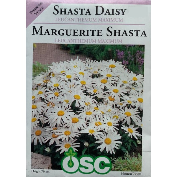 Shasta Daisy Seeds- Leucanthemum Maximum