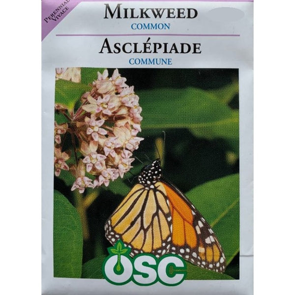 Milkweed Seeds- Common