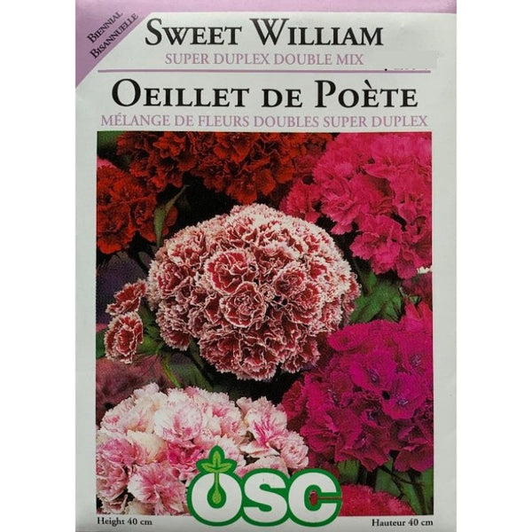 Sweet William Seeds- Super Duplex Double Mix (Biennial)