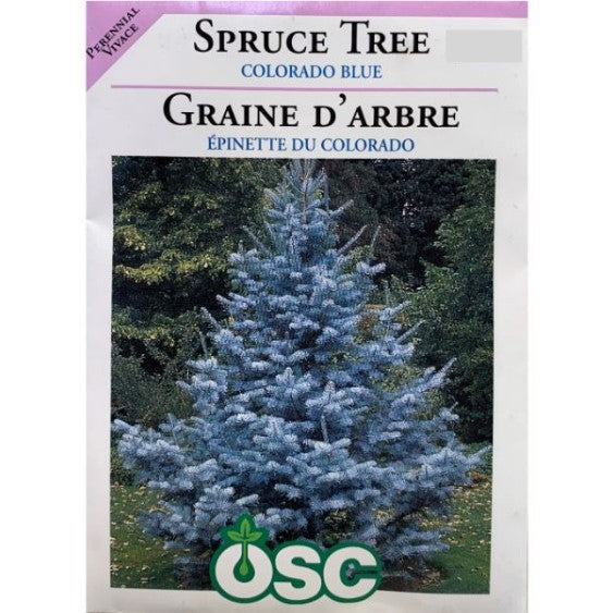 Spruce Tree Seeds - Colorado Blue