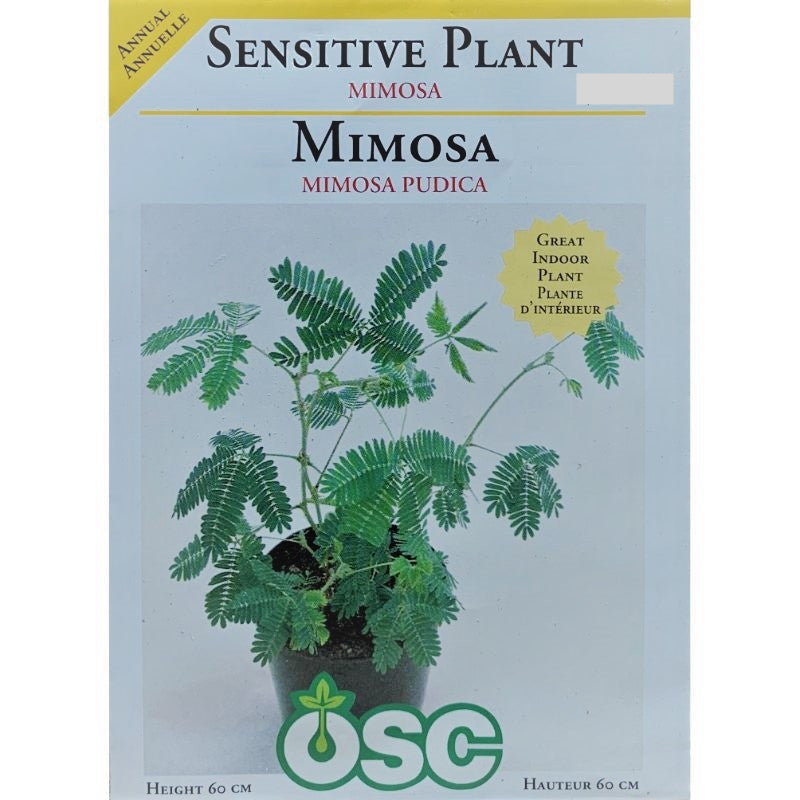 Sensitive Plant Seeds- Mimosa
