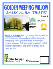 Golden Weeping Willow -IN STORE PICK-UP ONLY