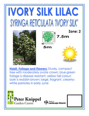 Ivory Silk Japanese Lilac Tree -IN STORE PICK-UP ONLY