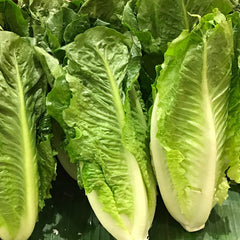 Lettuce Romaine - IN STORE PICK-UP ONLY