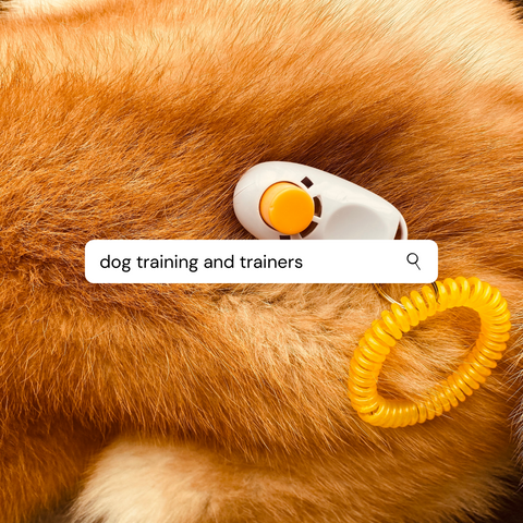 Dog Trainers and Training Vancouver BC