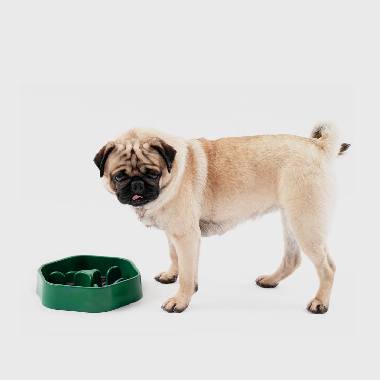 Pidan Slow Feeder Dog Bowl