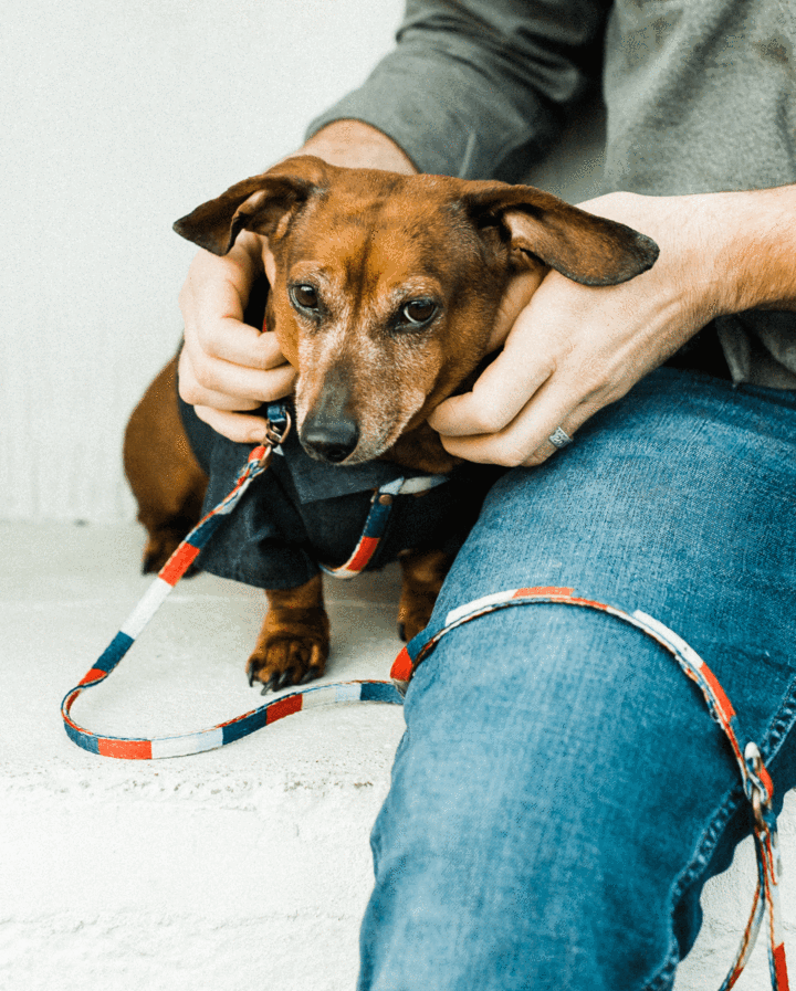 Dog Threads - All In One Harness and Leash - Striped