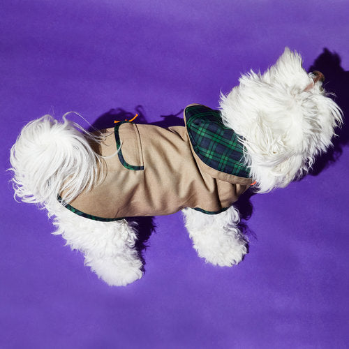 Ware of the Dog Khaki Tartan Raincoat