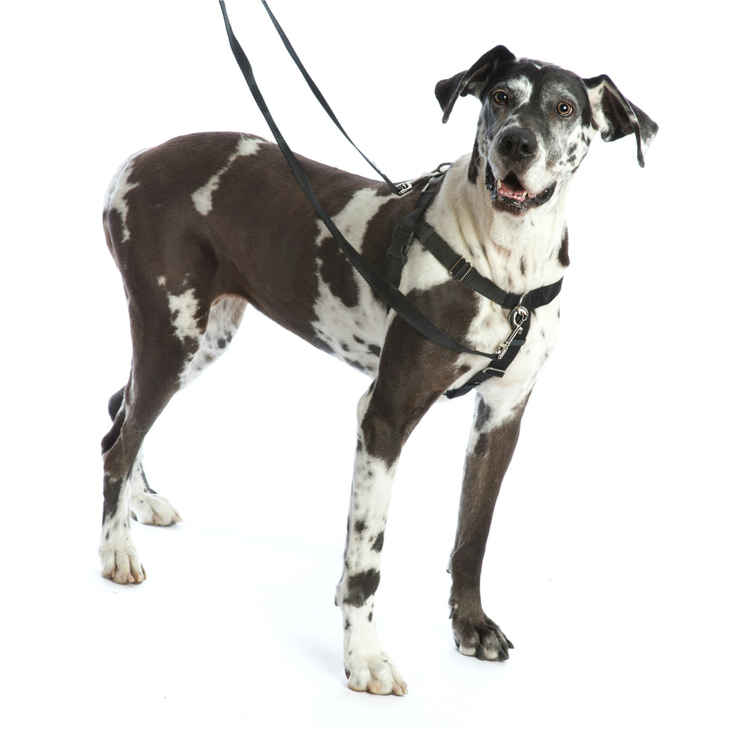 2 Hounds Design -  Freedom No Pull Harness  - Black