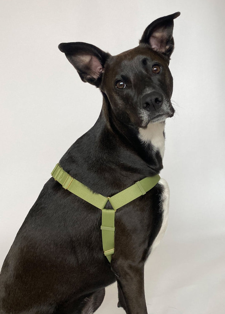 Awoo Roam No-Pull Harness - Sage Green