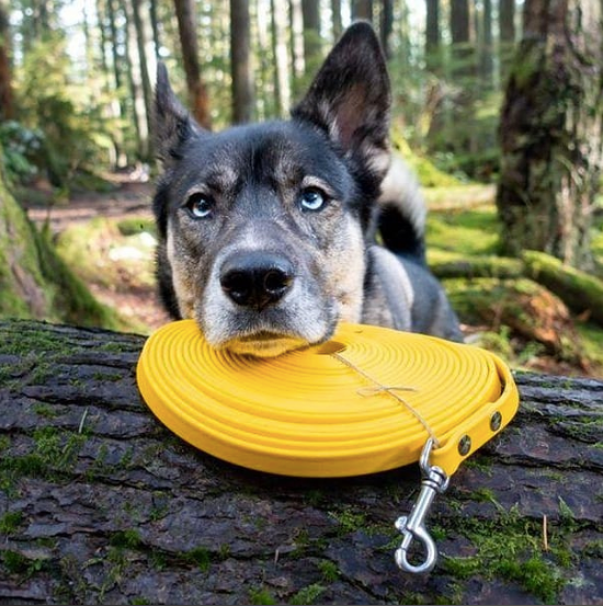 Mountain Mutt Long Line (10ft and 20ft Leash)