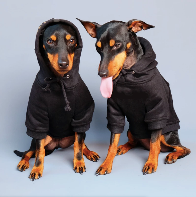 Pet Haus Black Hoodie (ONE LEFT SIZE XS)