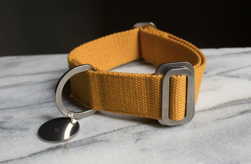 Hindquarters - Canvas Collar - Mustard