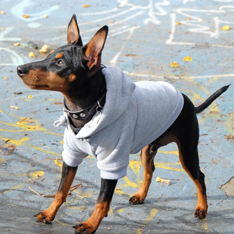 Pet Haus Grey Hoodie (ONE LEFT 4XL ONLY)