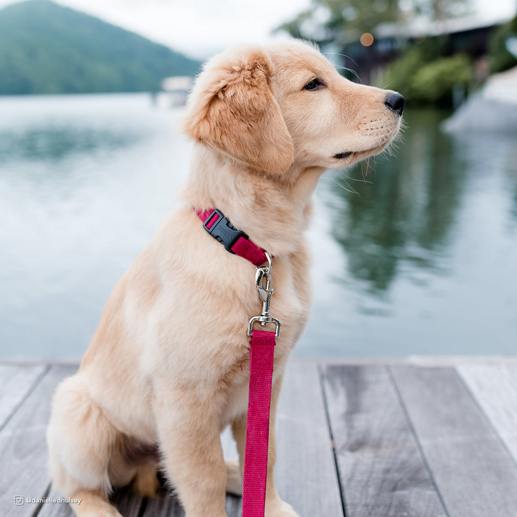 New Earth - Soy Comfort Collar - Cranberry