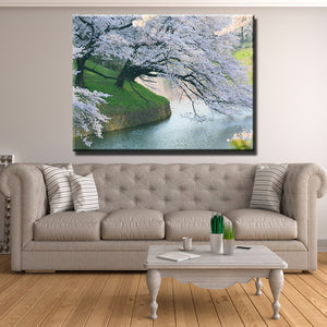 Cherry Blossom Lake Canvas