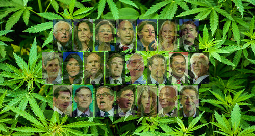 Where Do The 2020 Presidential Candidates Stand On Cannabis?