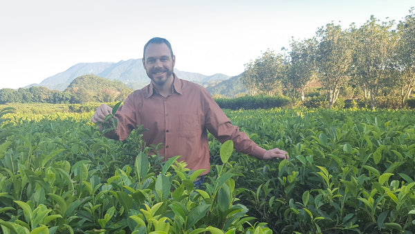 Jim Lamancusa, Cusa Tea Founder