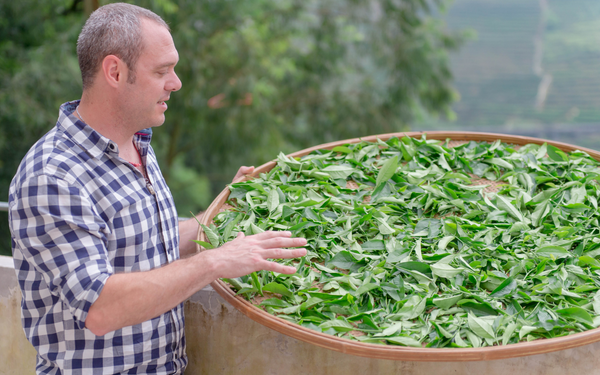 Cusa Tea Founder Jim Lamancusa inspecting tea being dried