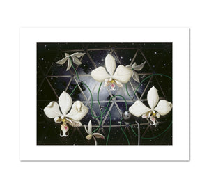 Alexis Rockman, Biosphere: Orchids, 1993, Fine Art Prints in 4 sizes by 2020ArtSolutions