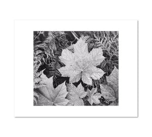 Close-up of leaves by Ansel Adams Archival Print