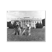 Kennedy Family Dogs Charlie and Pushinka on the South Lawn of the White House