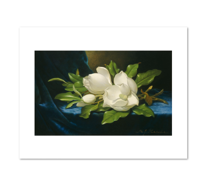 Giant Magnolias on a Blue Velvet Cloth by Martin Johnson Heade Archival Print
