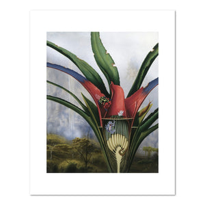 Alexis Rockman, Bromeliad: Kaieteur Falls, 1994, Fine Art Print in 4 sizes by 2020ArtSolutions
