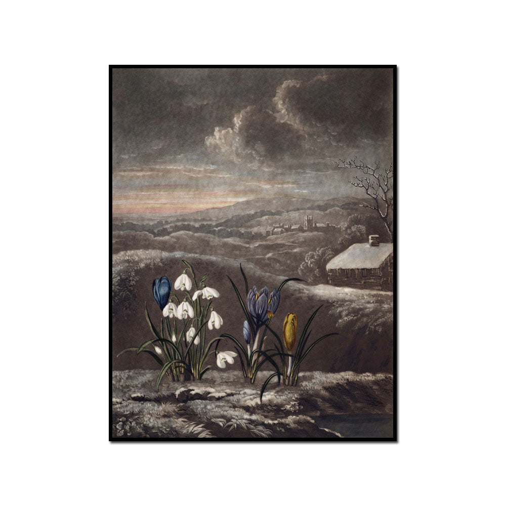 The Snowdrop by Robert John Thornton Artblock