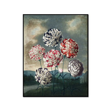 A Group of Carnations by Robert John Thornton Artblock