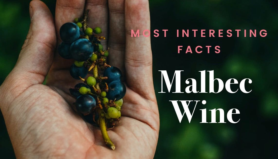 Malbec Wine Facts