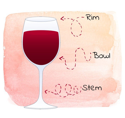 Wine glass anatomy