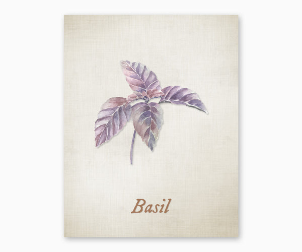 Basil Vintage Kitchen Wall Art