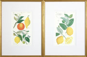 Citrus Prints - Pair
