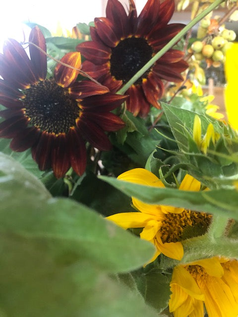 Freshly Cut Sunflowers and Arrangements