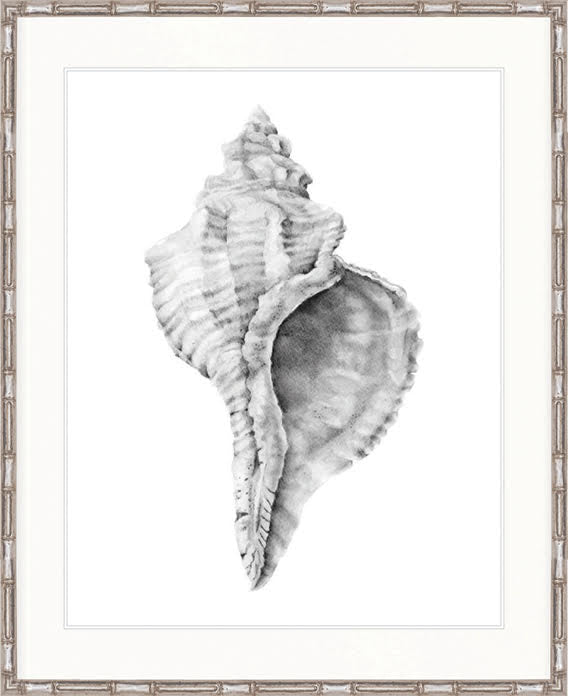 Shell Collection - DBSC-3
