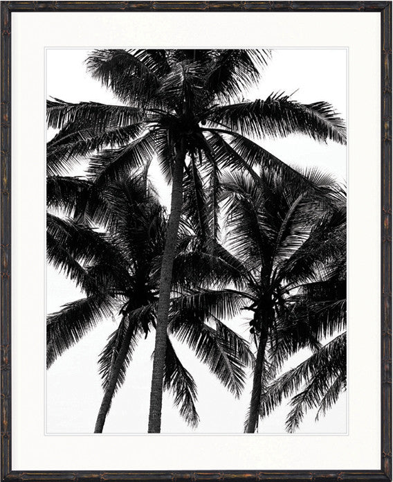 Palm Collection - DBP1