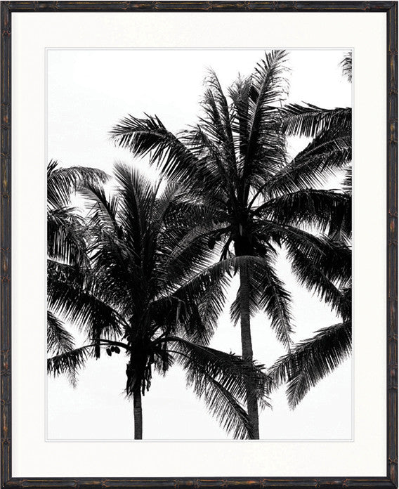 Palm Collection - DBP3