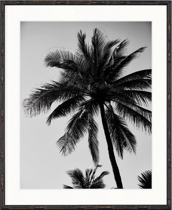 Palm Collection - DBP6