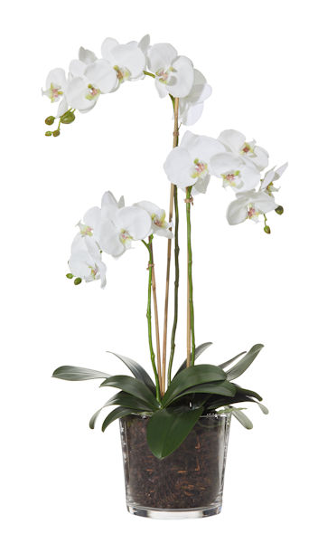 Orchid small