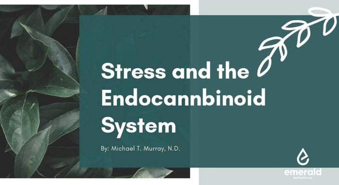 Stress and the Endocannabinoid System
