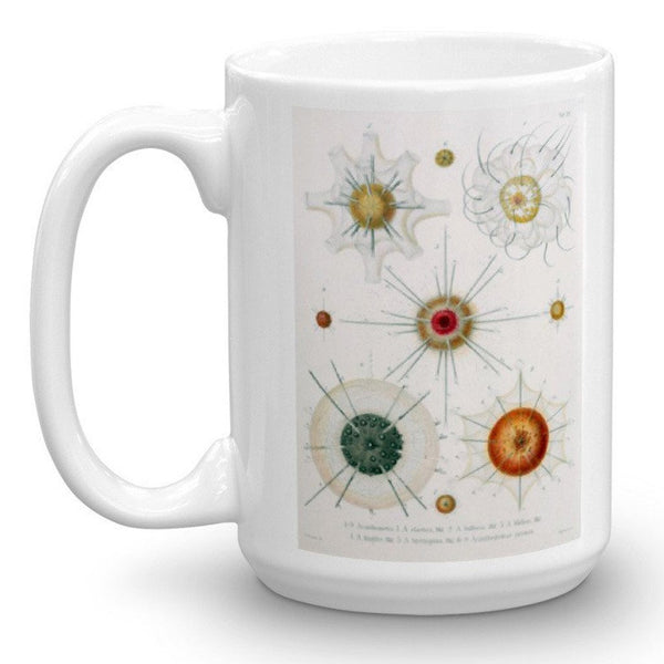 Drinking with Inspirational Radiolaria