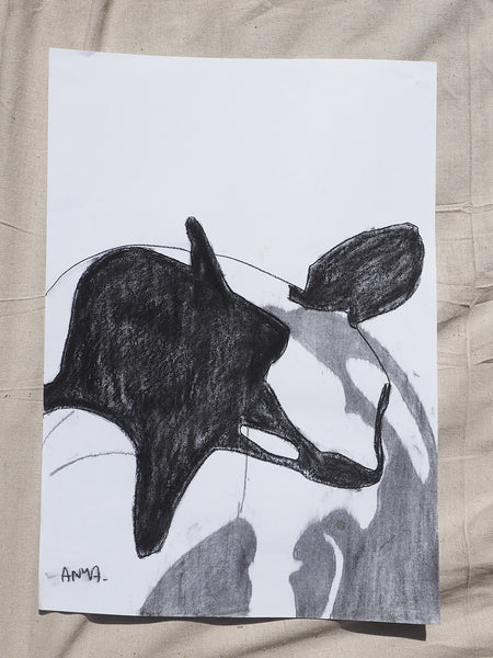 'Killer Whale Sketch'
