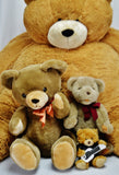 Teddy Bear Collection - Vermont Teddy Bear, Classic Gund, etc.