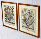 Vintage Framed January and September Botanical Engravings - Set of 2