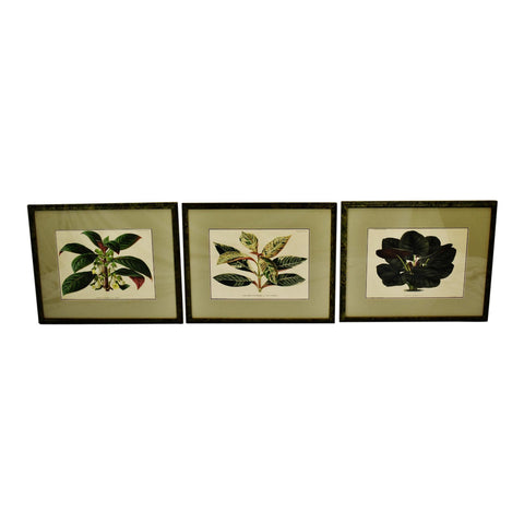 Antique Framed 1800's French L'illustration Horticole Botanical Prints - Set of 3