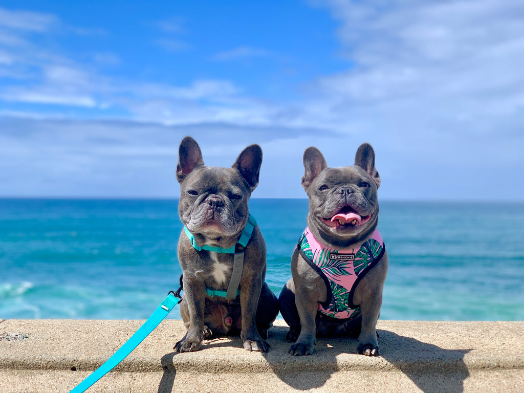 Henry & Penny Travel to San Diego!