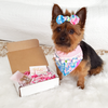 Designer Pet Bandana Box